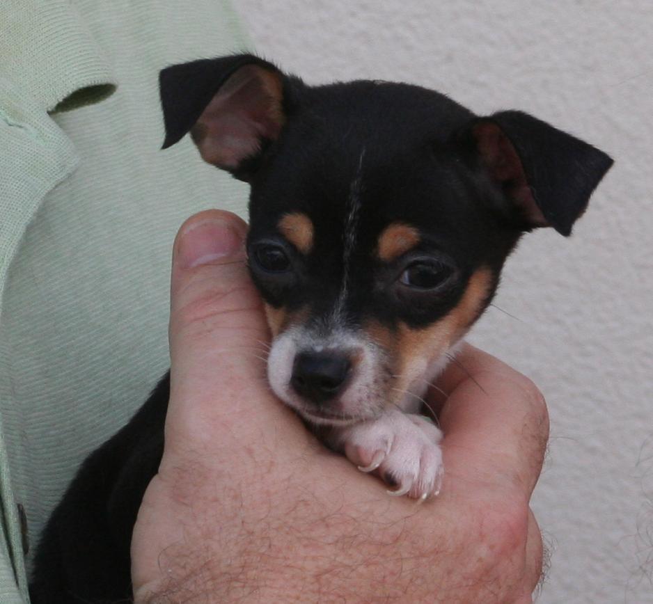 Pet of the Week - Gracie Rose