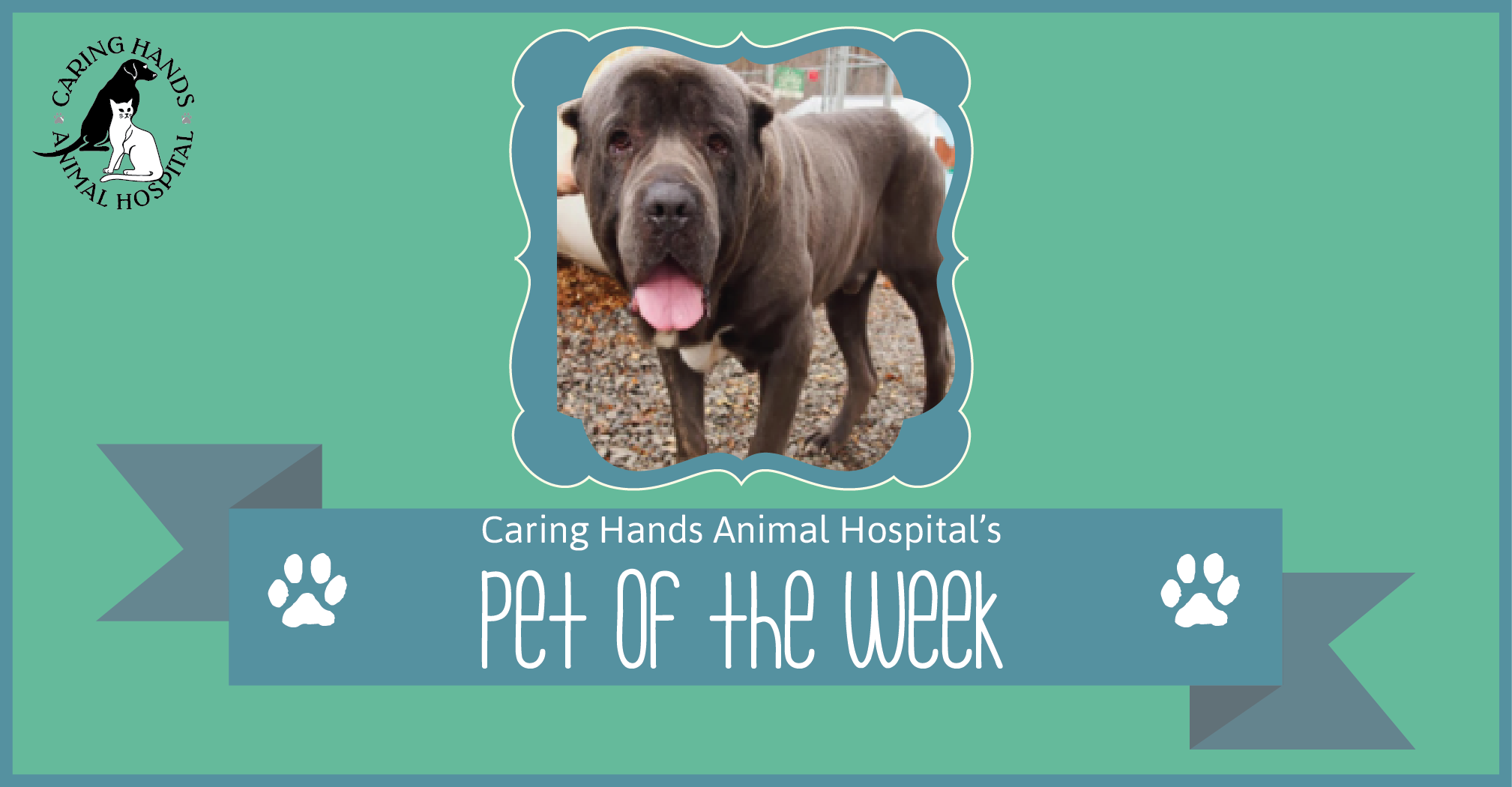 Rudy Nelson - Pet of the Week-01