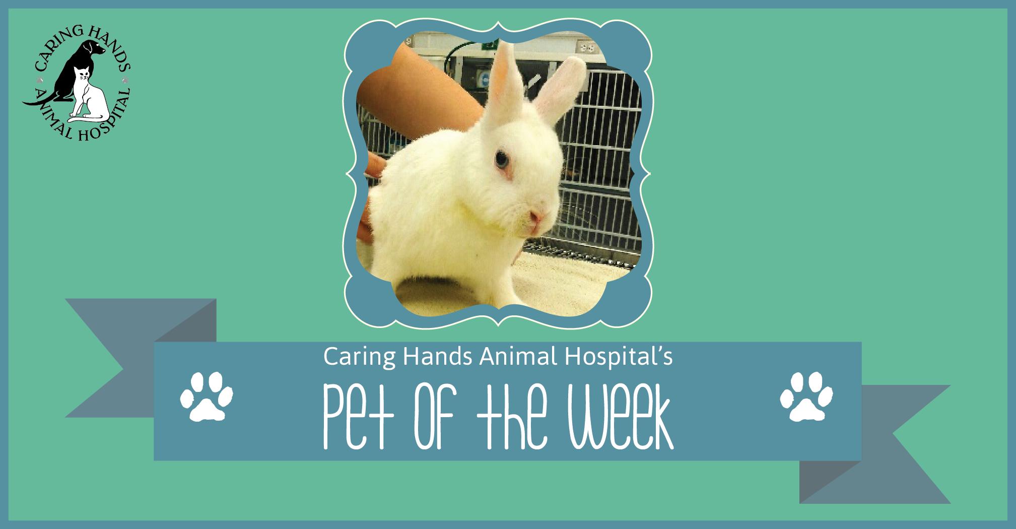 Pet of the Week - Zoey Hegner