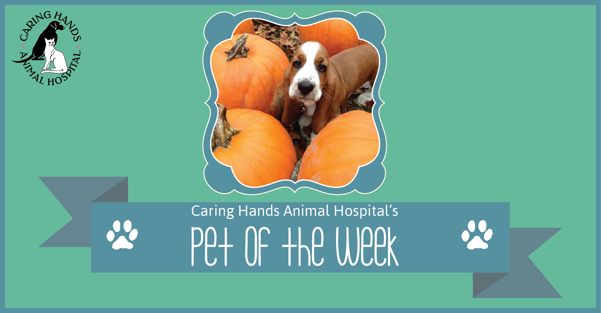 Pet of the Week - Maizy Richardson-01