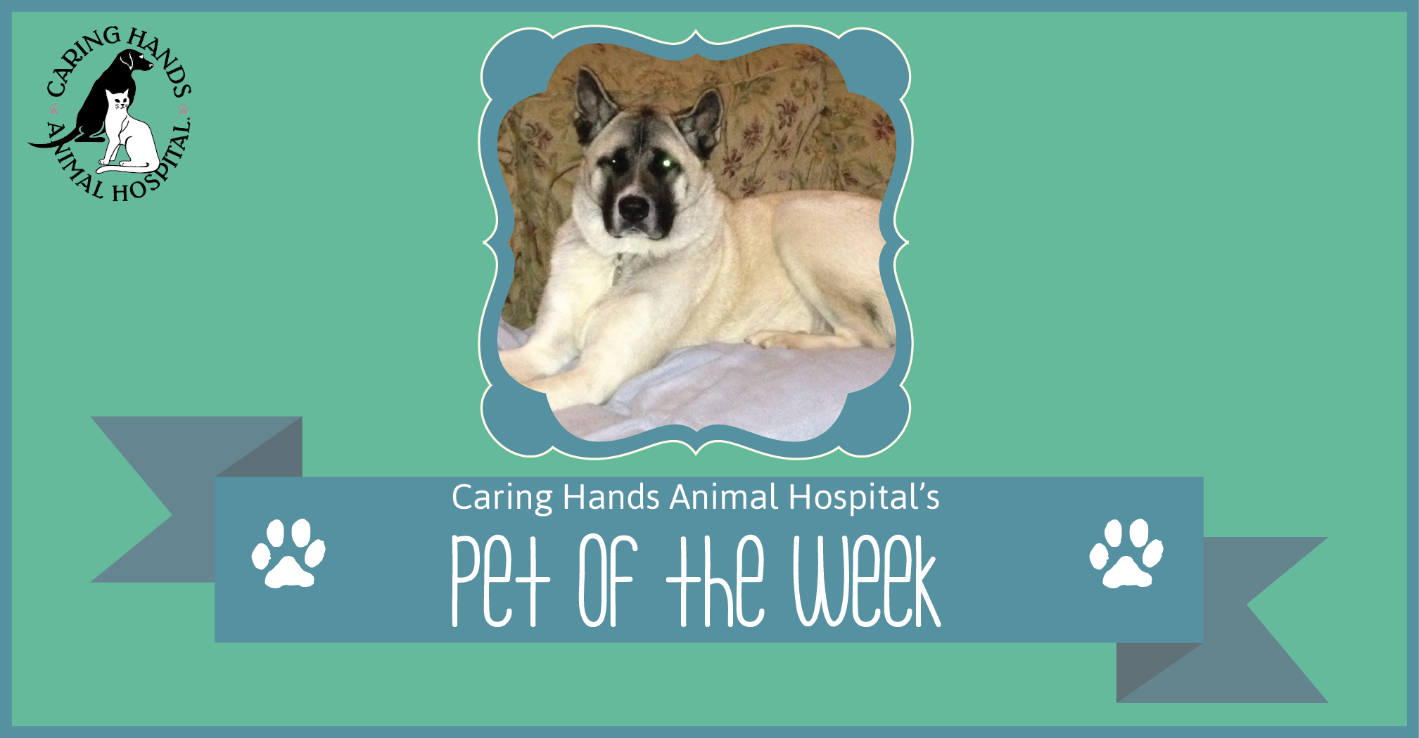Pet of the Week - Mitsu Burroughs-01