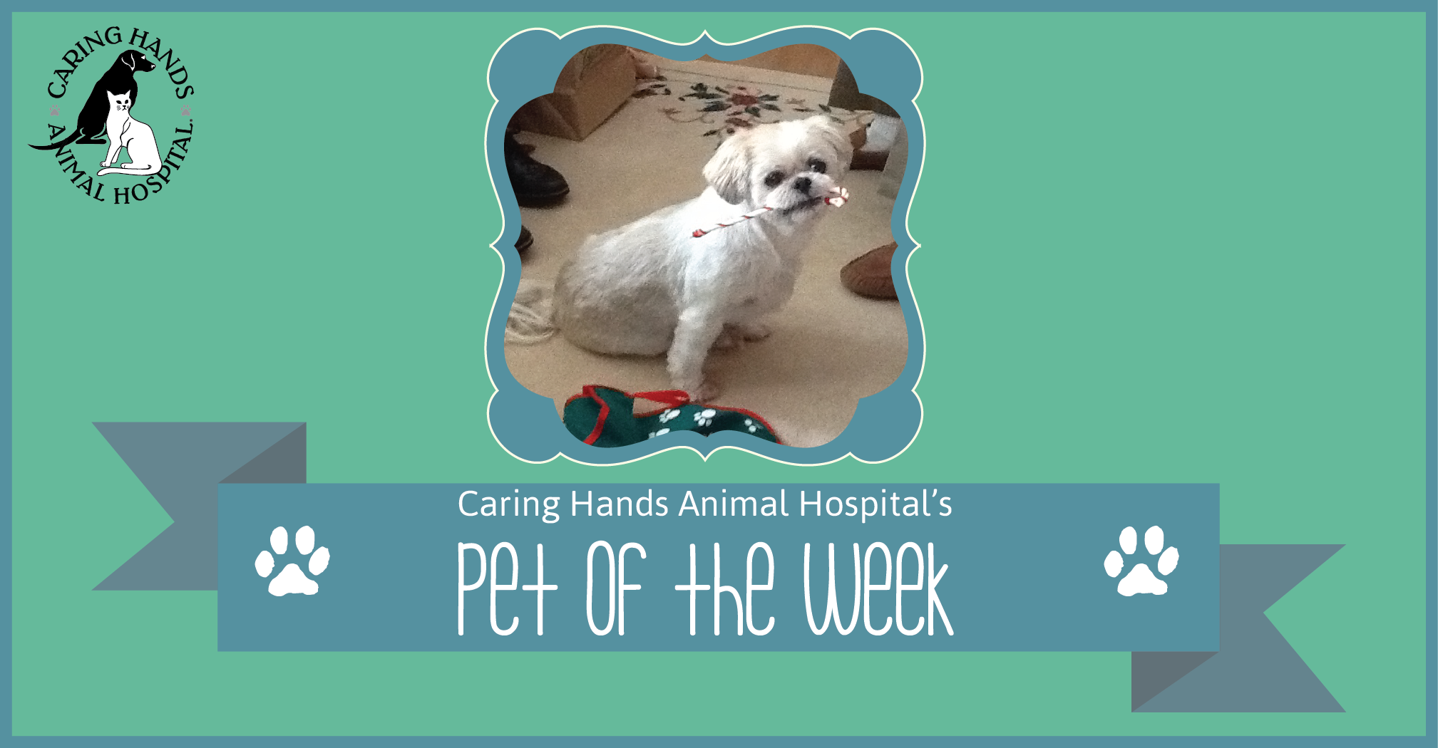 Pet of the Week - Putter Harding-01