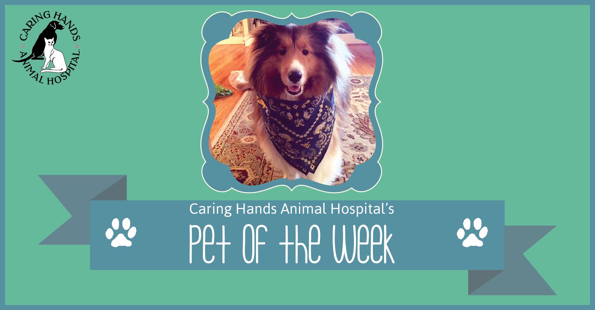 Pet of the Week - Teddy Williams-01