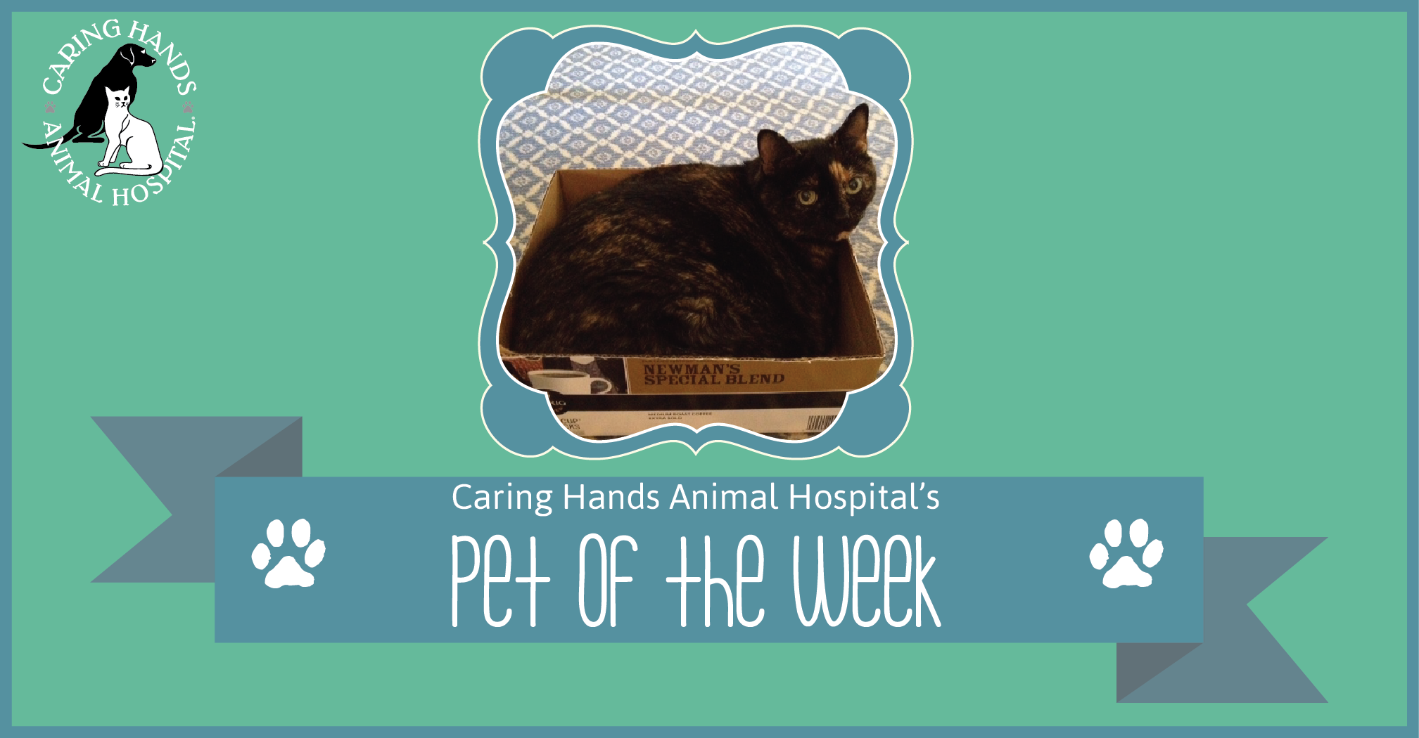 caring society week 1 kitten fostering handbook the austin humane society relies on a pool of dedicated and compassionate foster volunteers to care for kittens who are too.