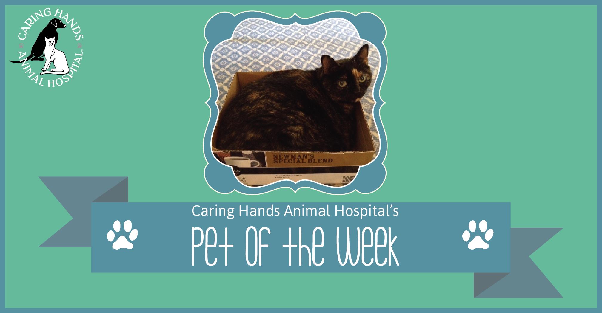 Pet of the Week - Punky Tyson-01