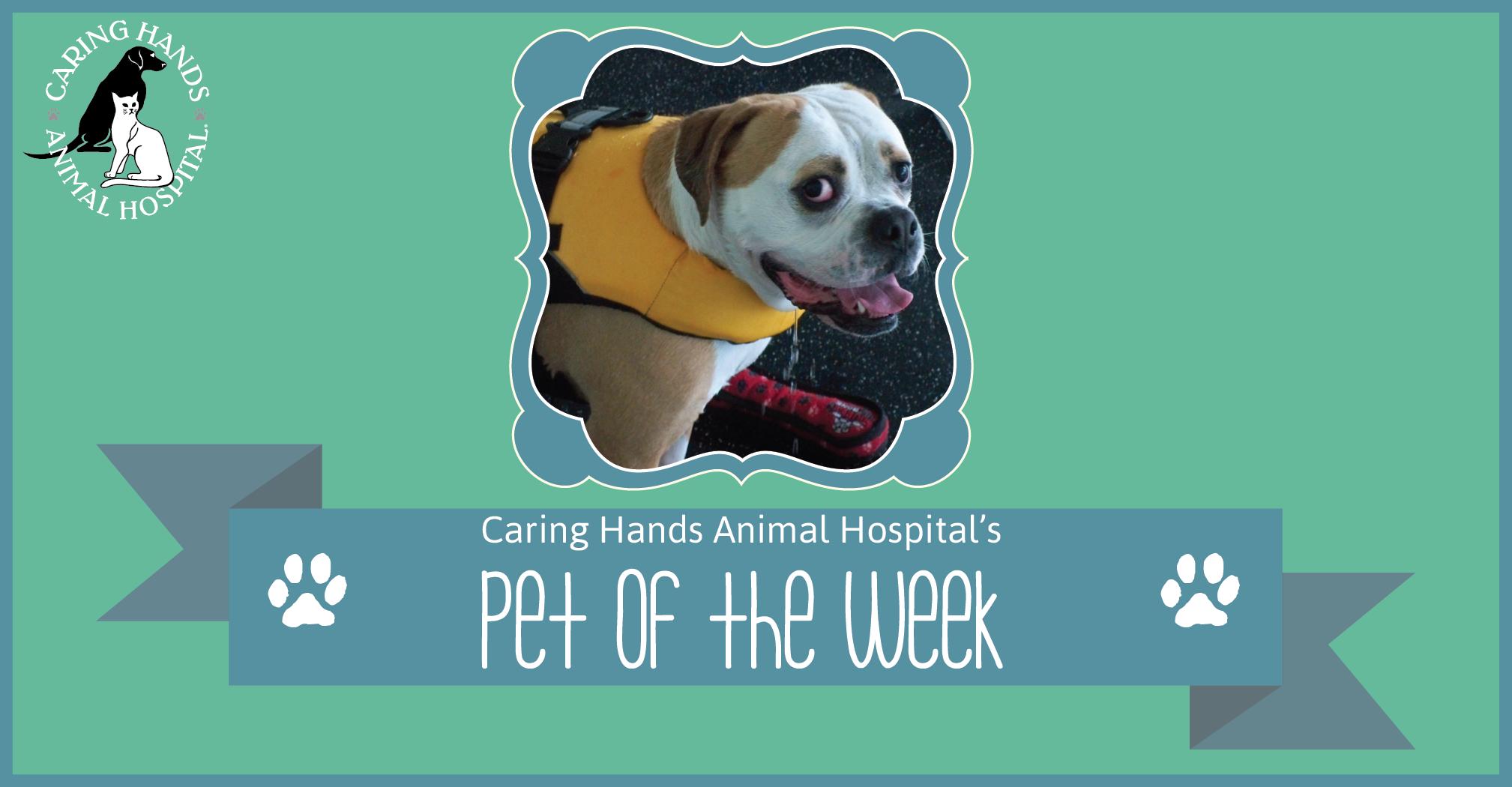 Romeo Greiner - Pet of the Week-01