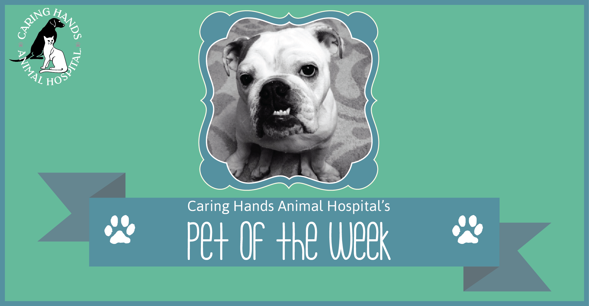 Ellie Tucker. - Pet of the Week-01