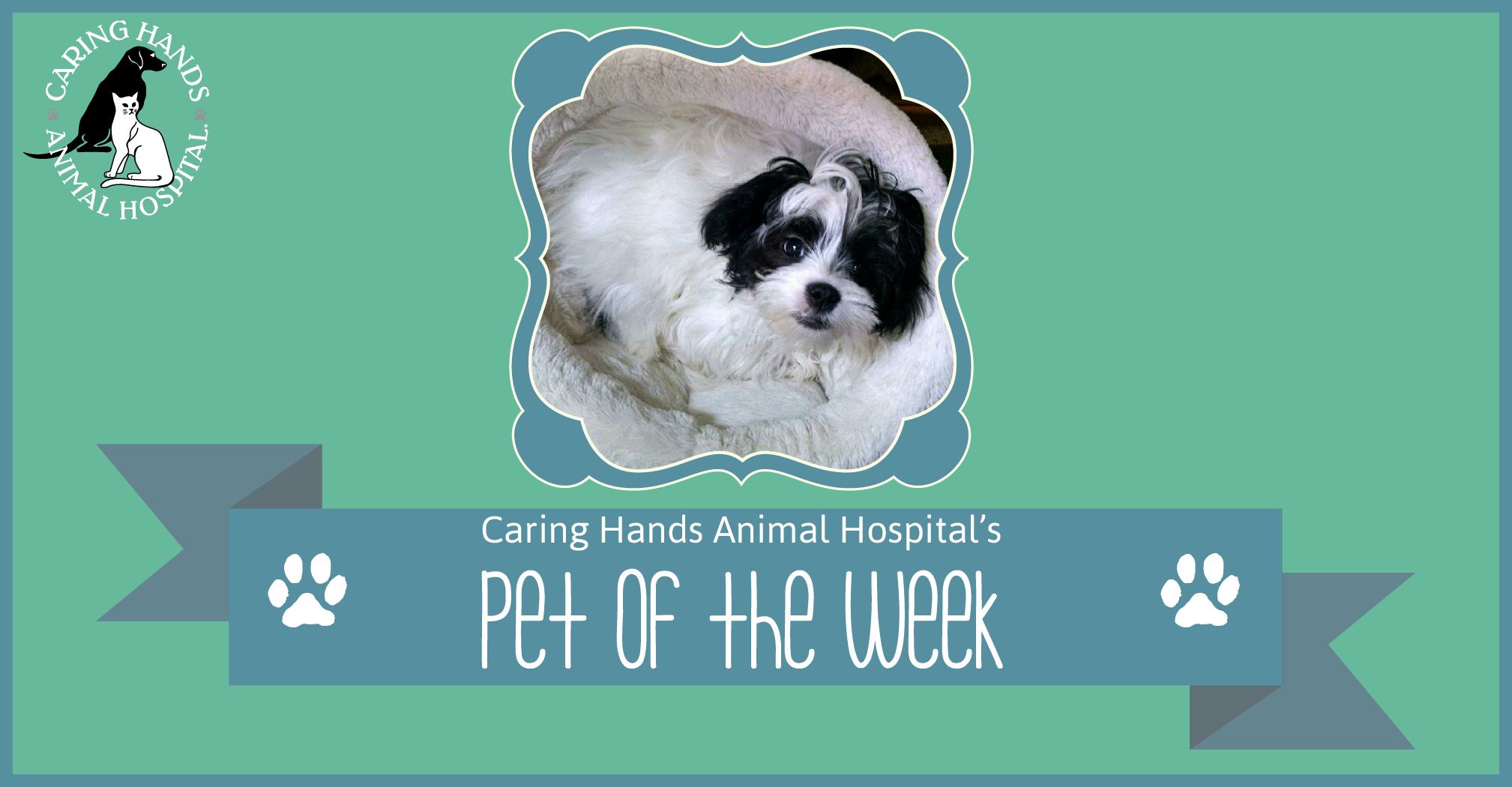 Pet of the Week - Theo Hertzfeldt-01