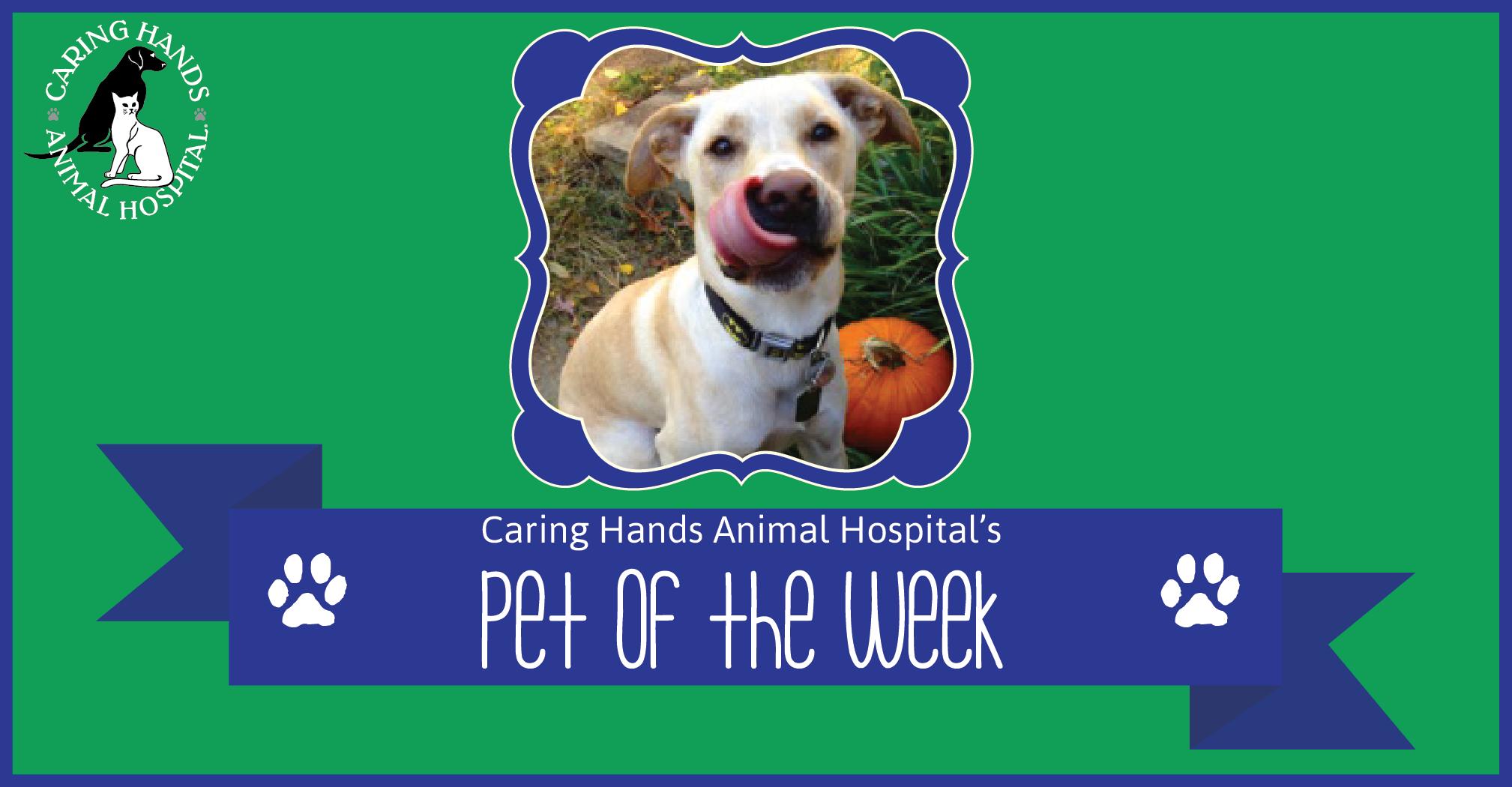 Pet of the Week - Eli Deane-01