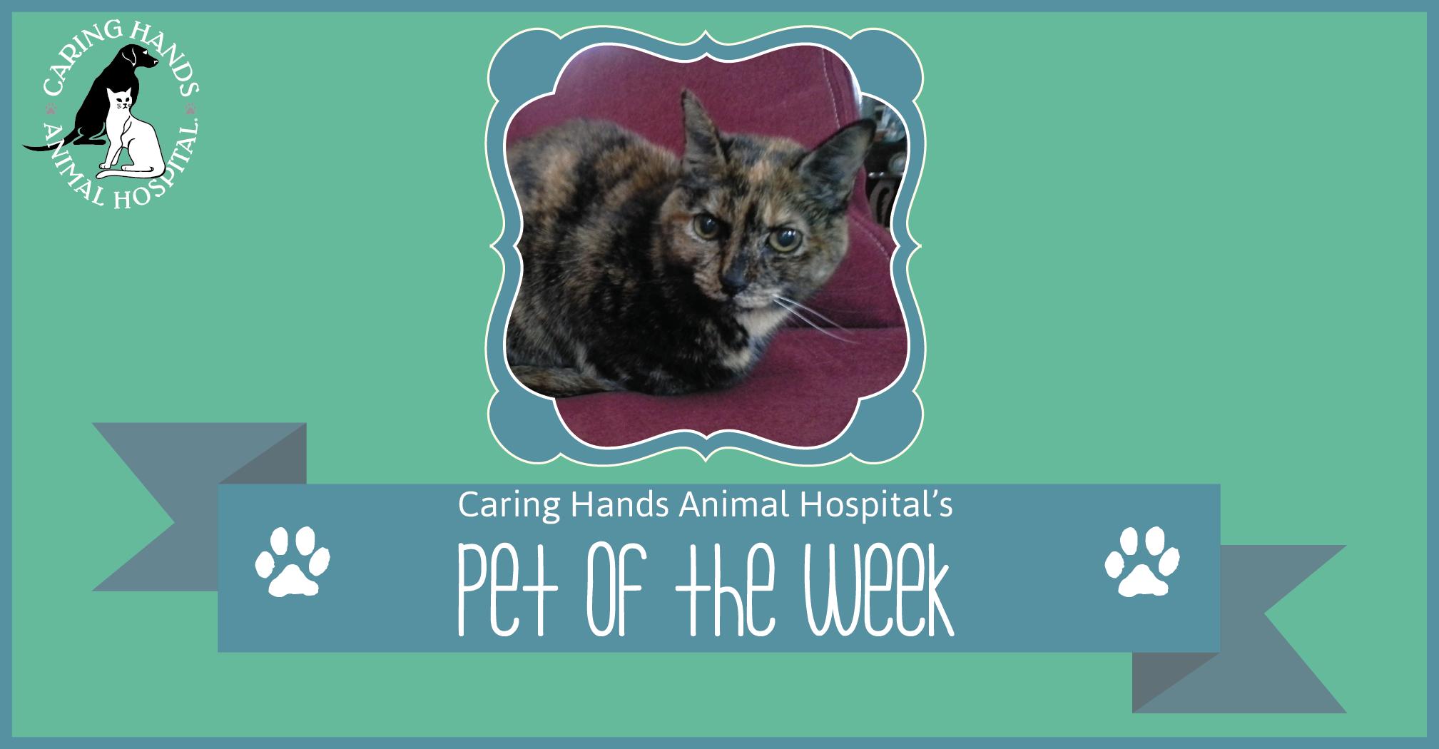 Pet of the Week - Maya Fournier-01