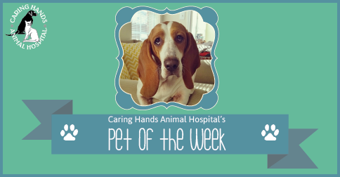 Clementine Baker - Pet of the Week-01