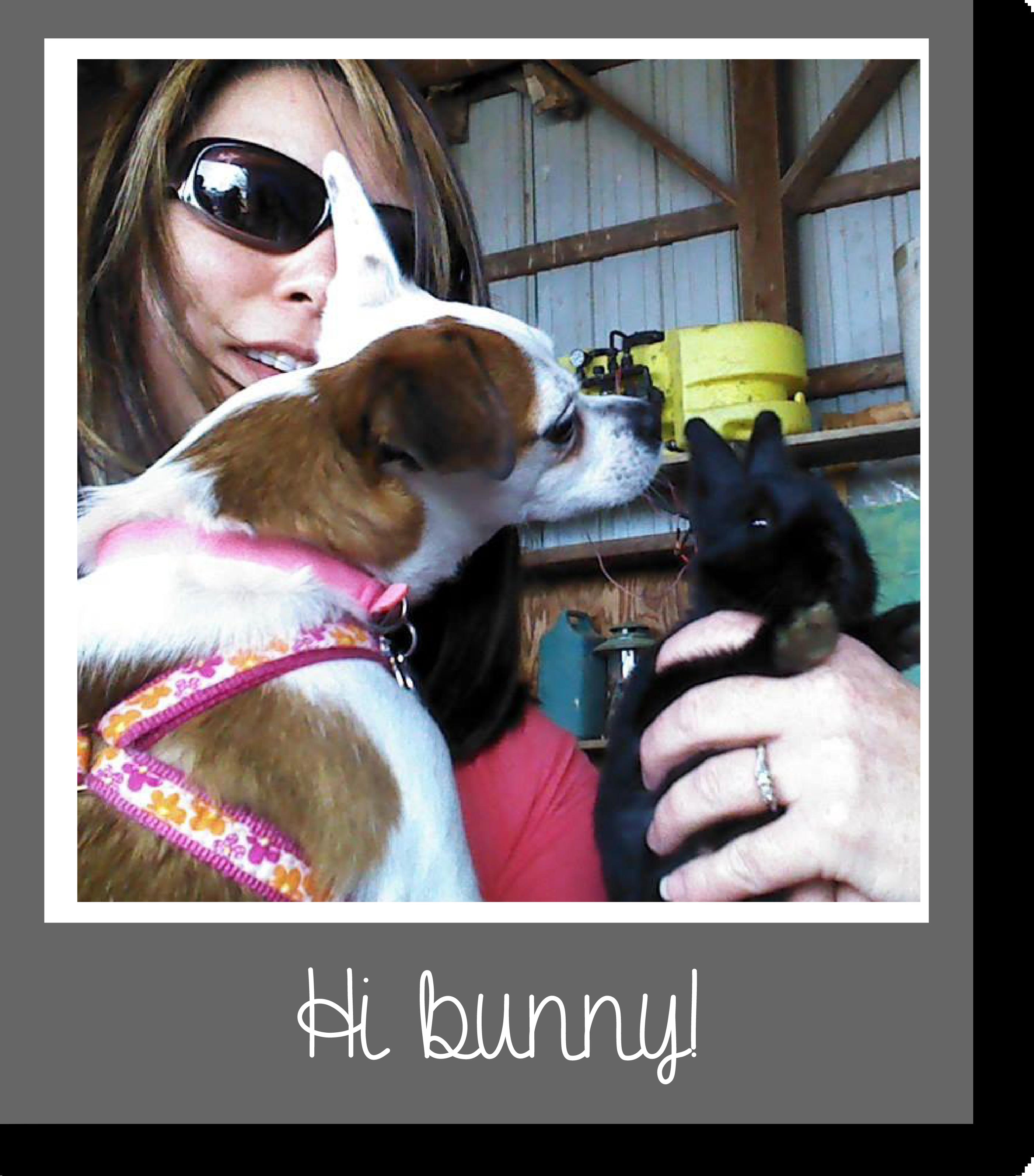 Tilly's Travels - Hi bunny!