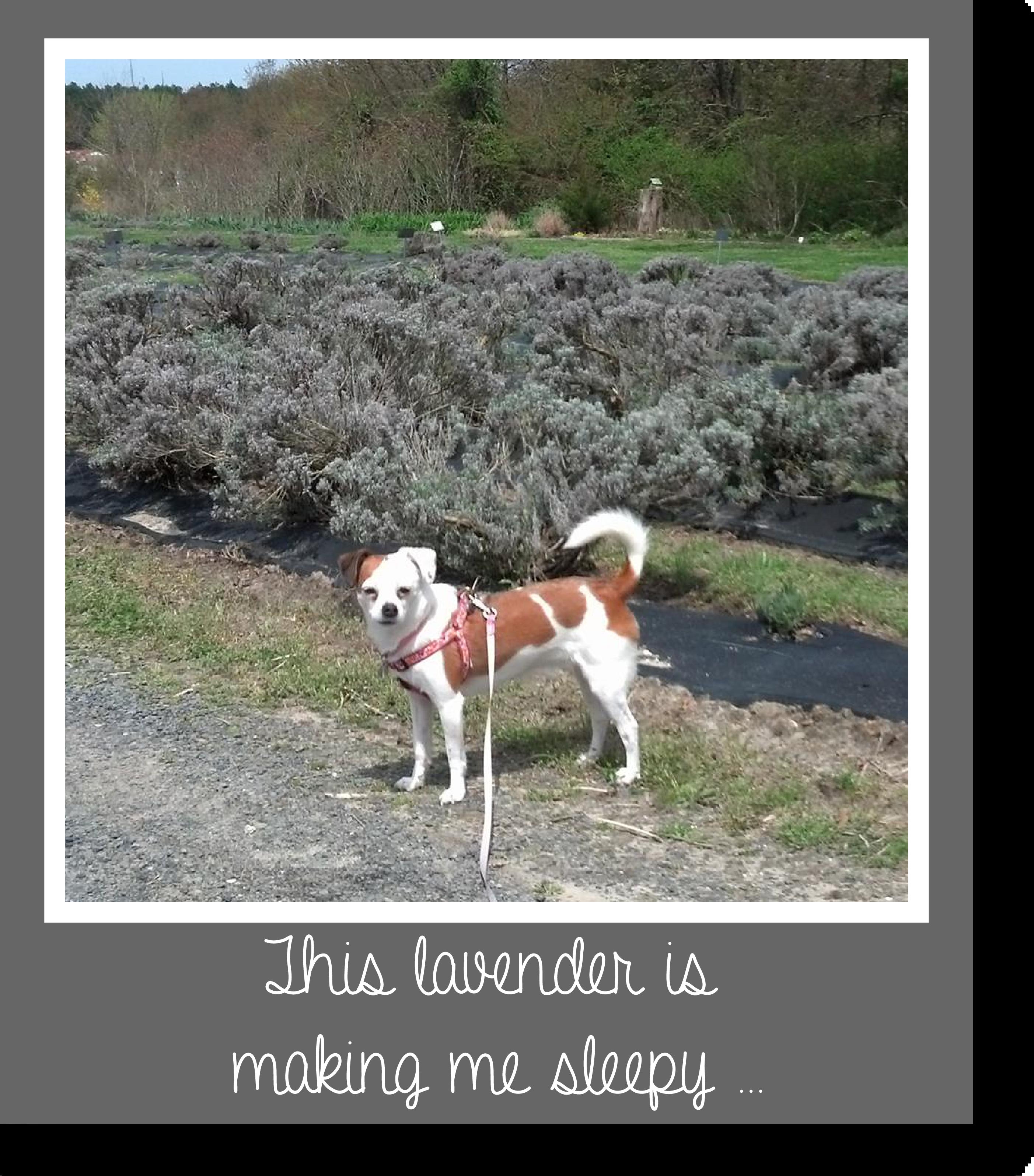 Tilly's Travels - Sleepy Lavender