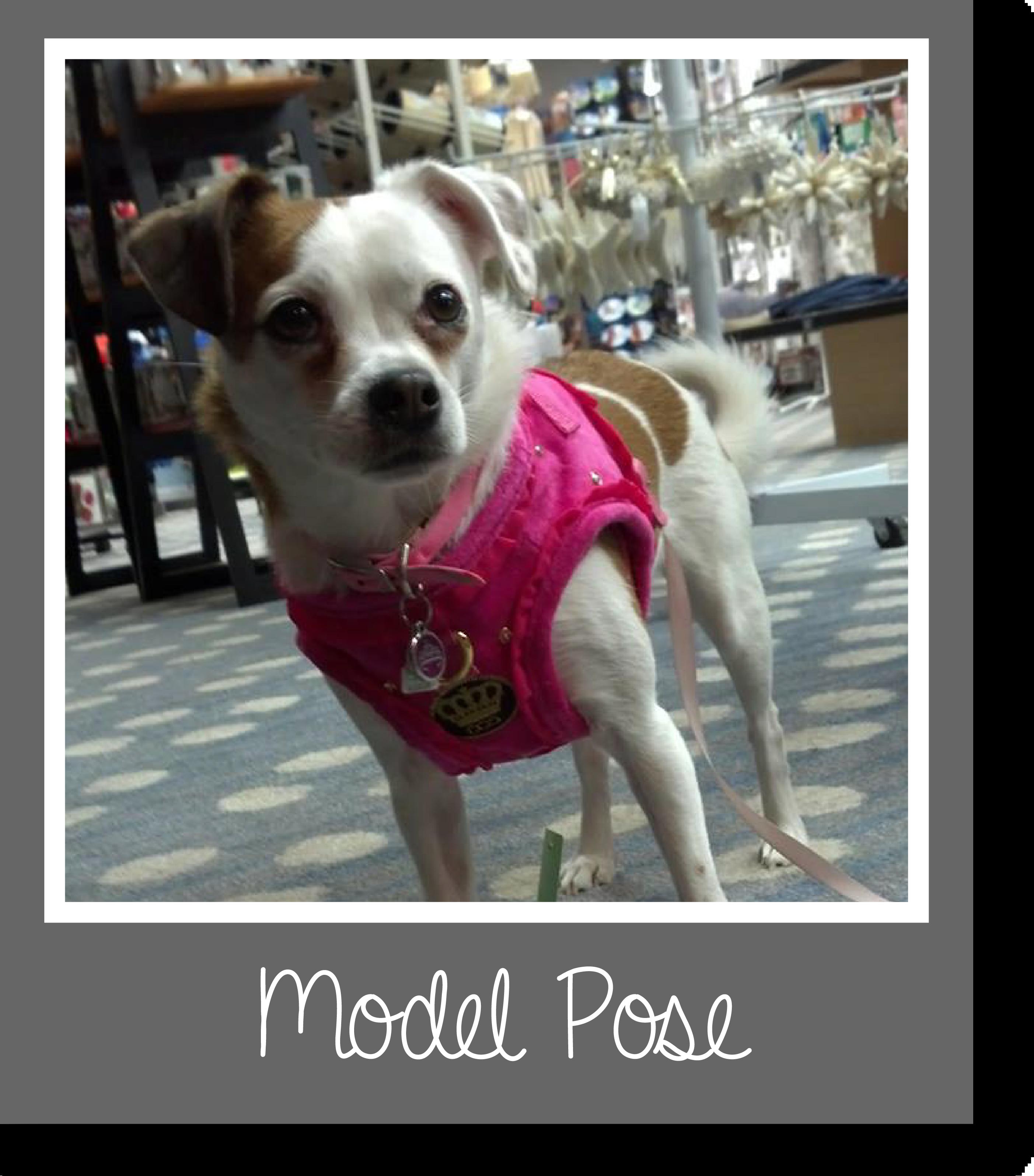 Tilly's Travels - Model Pose