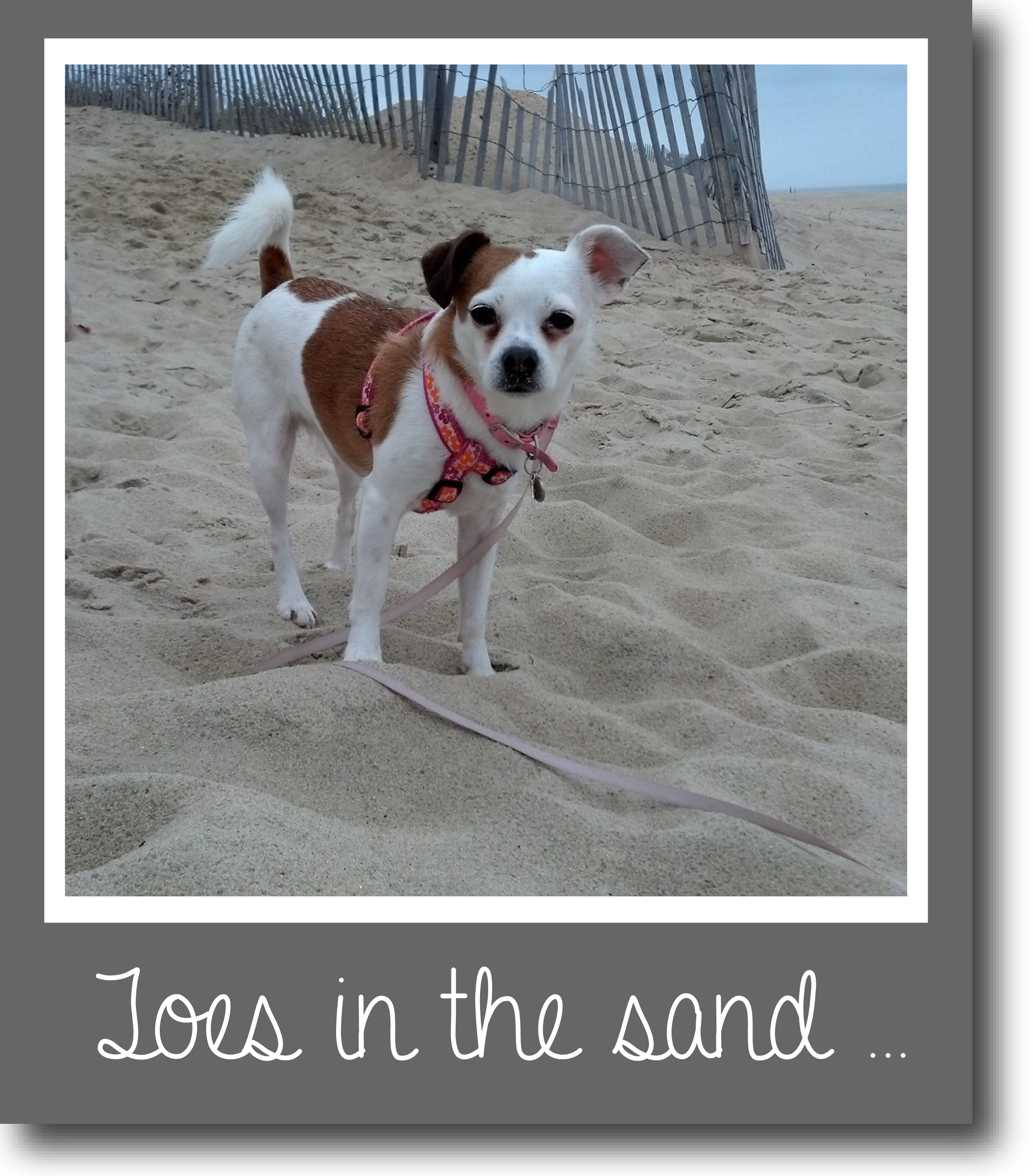 Tilly's Travels - Toes in the sand