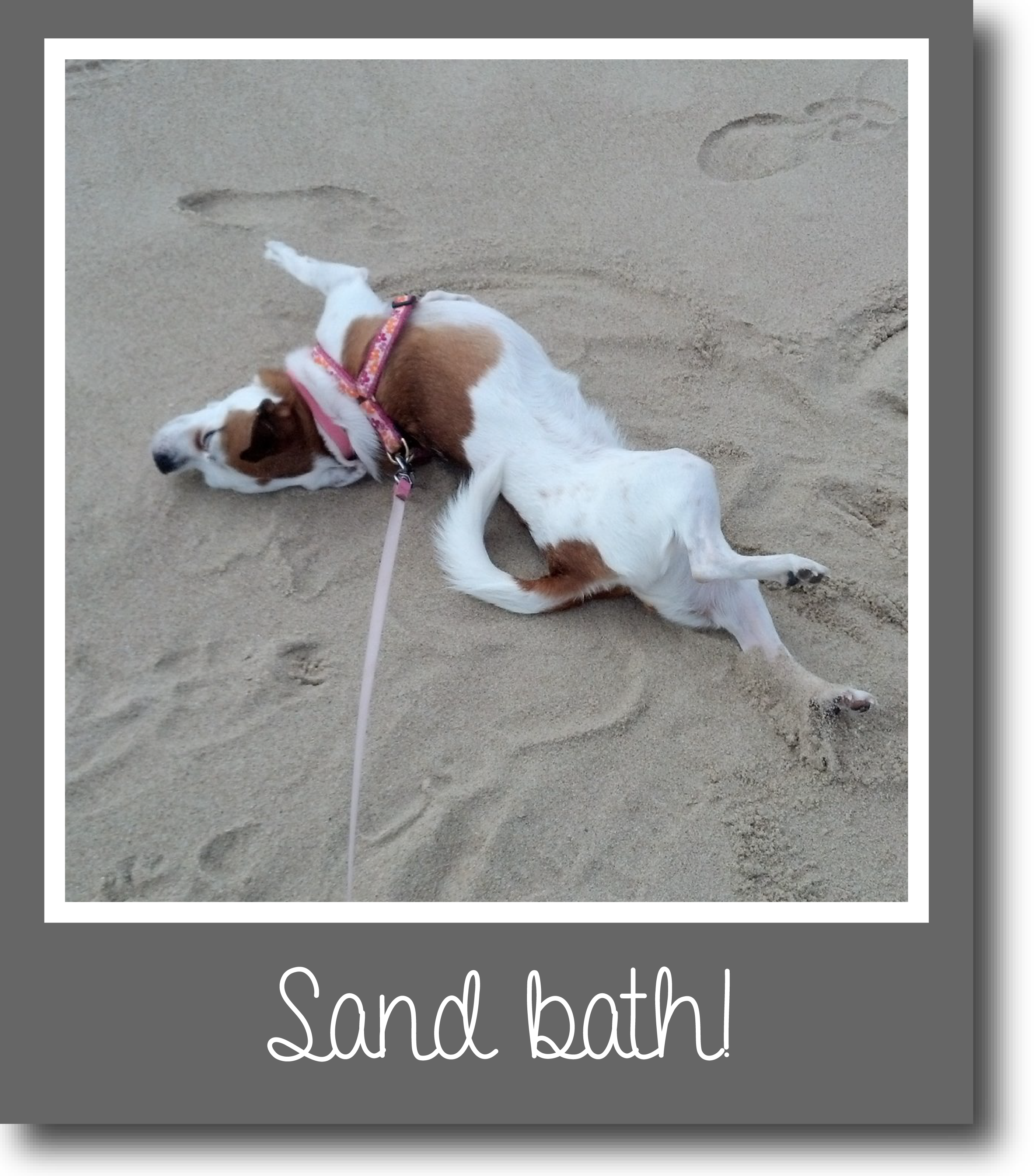 Tilly's Travels - Sand bath!