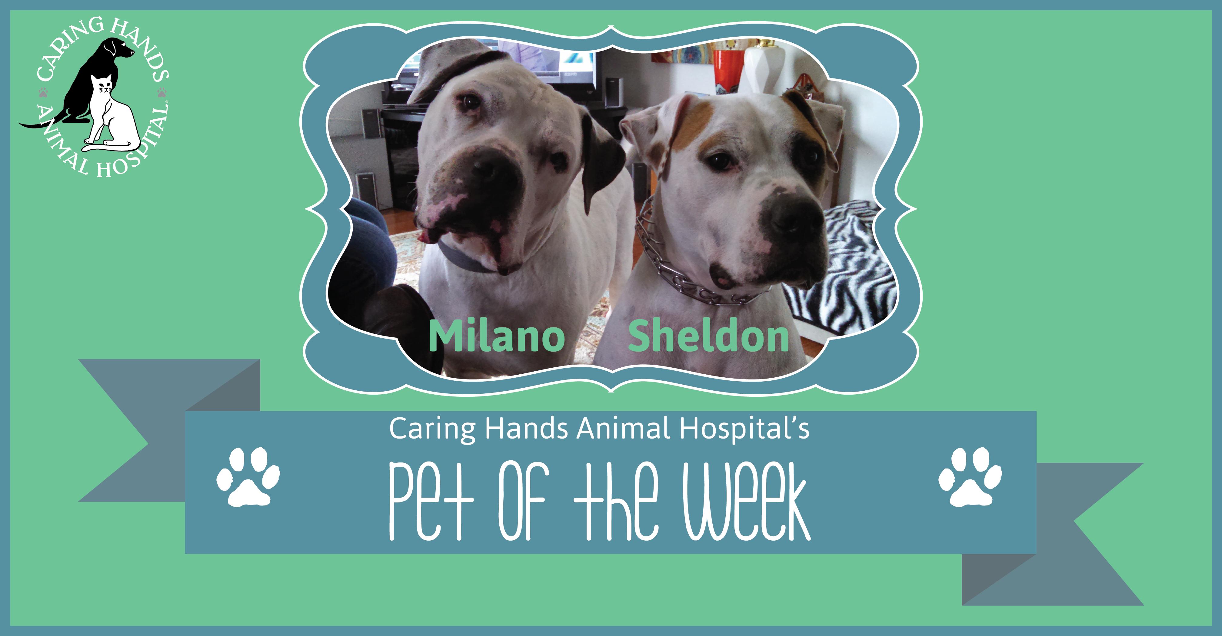 Milano & Sheldon Lyons - Pet of the Week-01