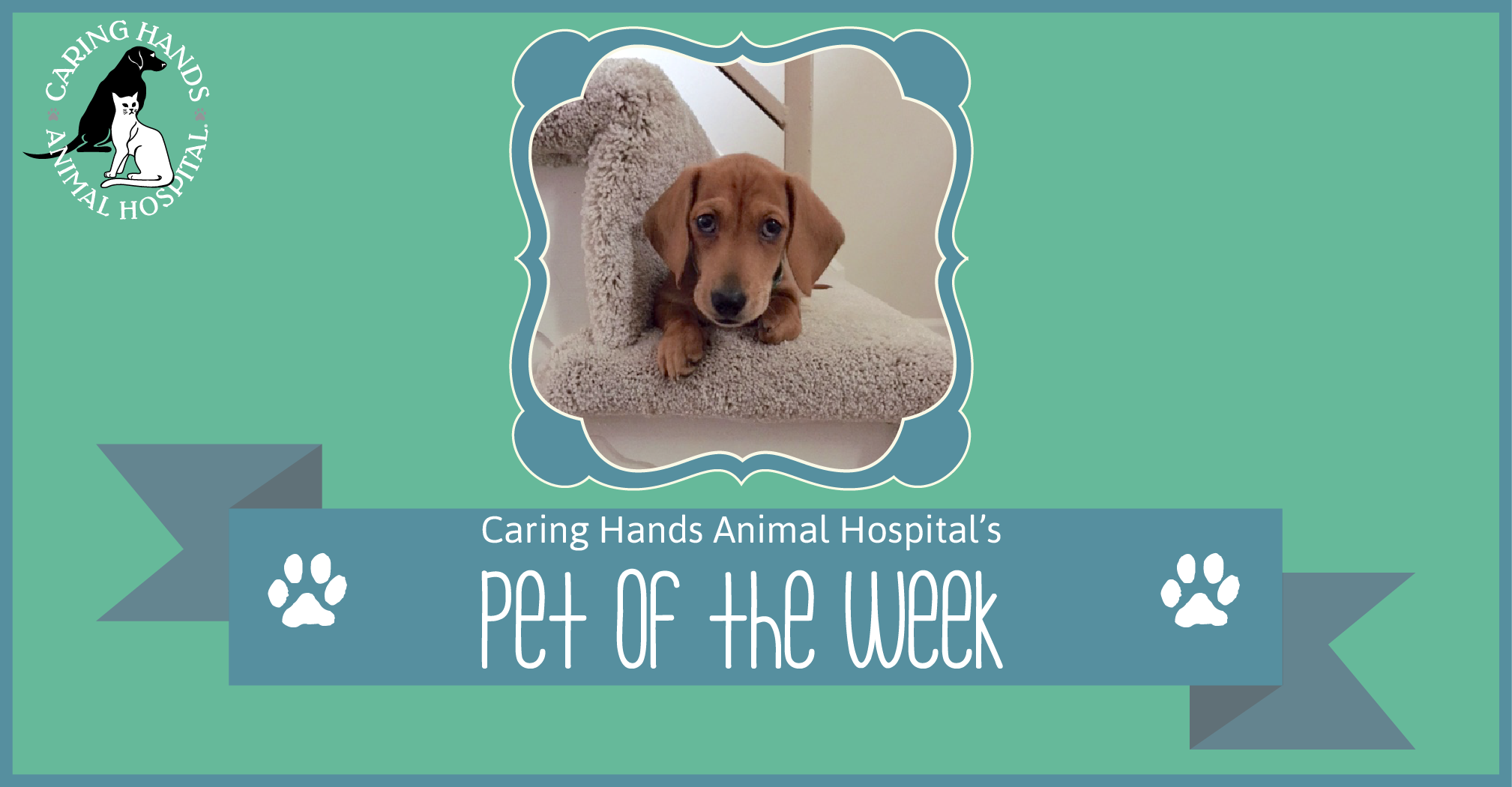 Pet of the Week - Arnie Bellan-01
