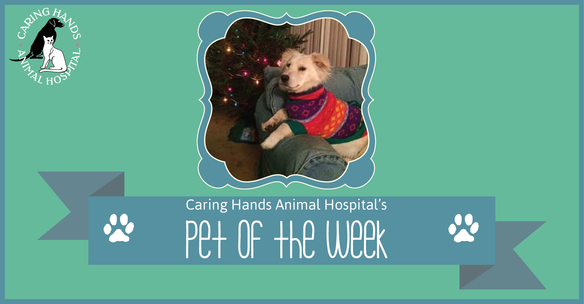 Pet of the Week - Calpurnia Donnell-01