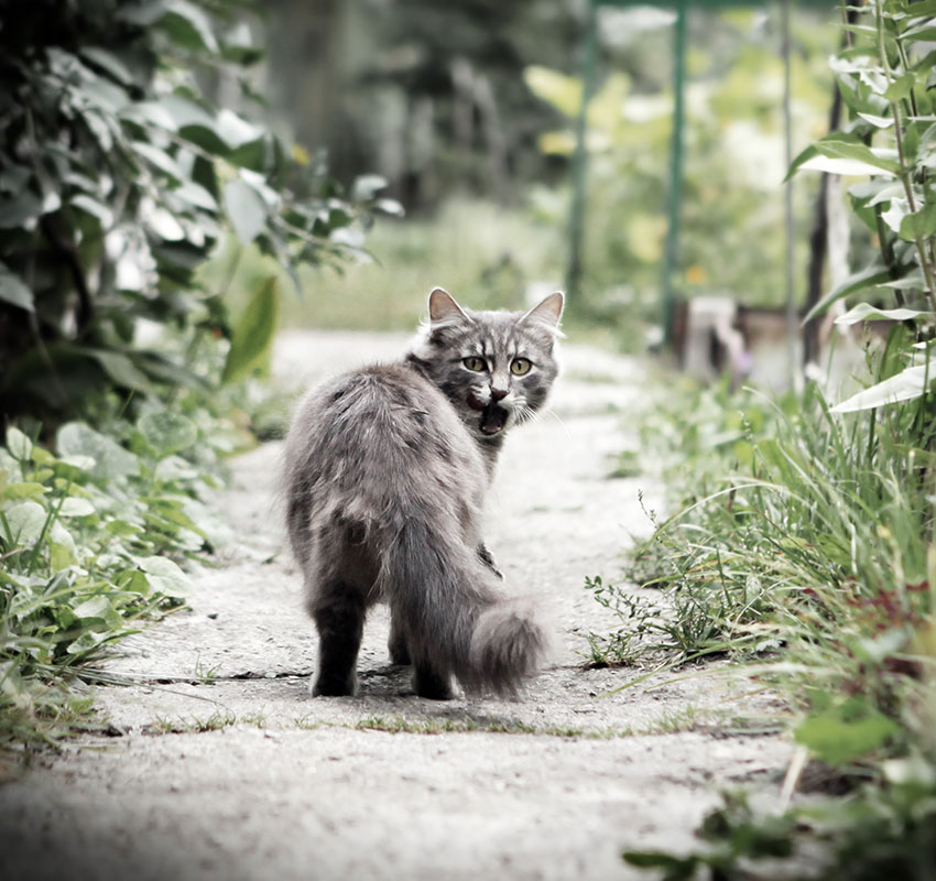 Vignetting Photo of Cat is Fleeing on the Nature Background - Image