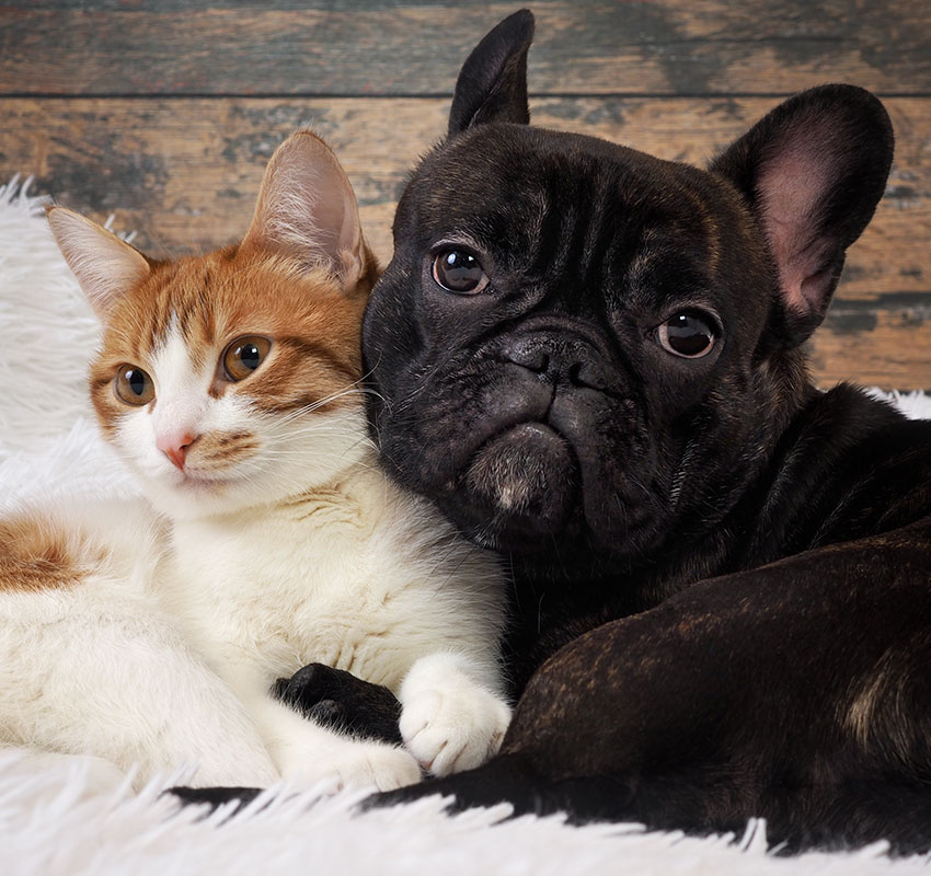 cat and dog together. Cute Pets. Portrait - Image