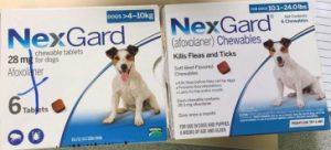 Example of counterfeit Nexgard flea tick pet medication.